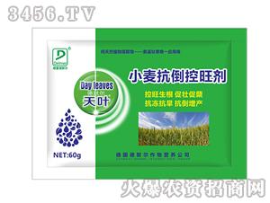 小麦抗倒控旺剂-天叶-