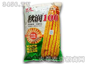 秋润100-玉米种子-鑫博农业