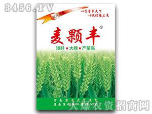 麦颗丰-小麦种子-佳瑞种业