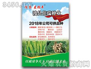 麦颗丰-小麦种子-佳黎-佳瑞种业