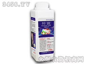1200g荔枝龙眼专用含氨基酸水溶肥料-叶芭