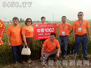 中麦1062小麦种子观摩会