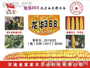 玉米种子-龙华368-家家丰