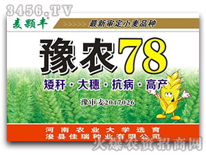 豫农78-小麦种子-麦颗丰-佳瑞种业