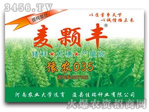 豫农035-小麦种子-麦颗丰-佳瑞种业