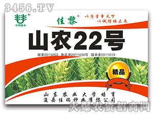 山农22-小麦种子-佳瑞种业