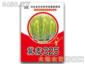 冀麦325-小麦种子-豫神农业