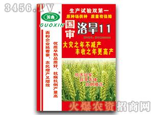 国审洛旱11-小麦种子-豫神农业