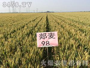 郯麦98小麦种子观摩会