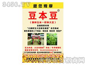 大豆种子-豆本豆-金麦郎