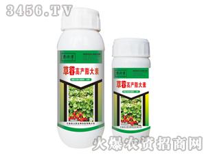 草莓高产膨大素-郭师傅