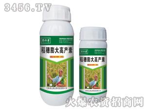稻穗膨大高产素-郭师傅-立信生物