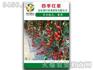 番茄种子-四季红星-旭