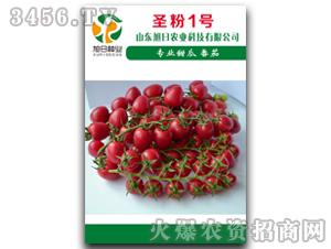 粉果樱桃番茄-圣粉1号