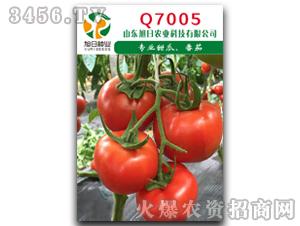红果番茄种子-Q700