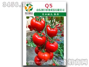 红果番茄种子-Q5-旭