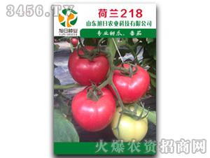 粉果番茄种子-荷兰21