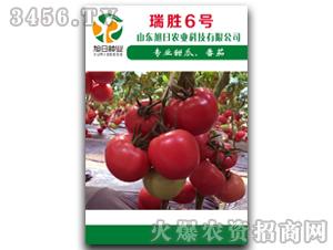 红果番茄种子-瑞胜6号