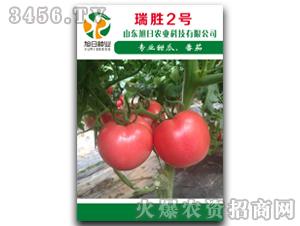 红果番茄种子-瑞胜2号