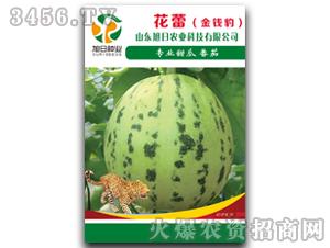 薄皮甜瓜种子-花蕾(金