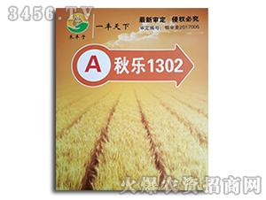 小麦种子-秋乐1302-禾丰子