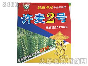 小麦种子-许麦2号-冠丰种业