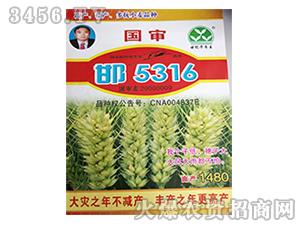 小麦种子-邯5316-冠丰种业