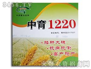 小麦种子-中育1220-金苹果种业