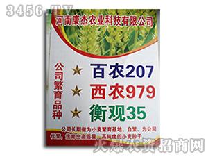 小麦种子-百农207-康杰农业