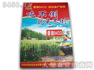 偃佃9433-小麦种子-中原地信