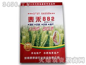 泰禾882-小麦种子-原原种