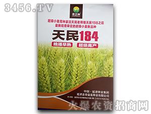 天民184-小麦种子-帝益麦
