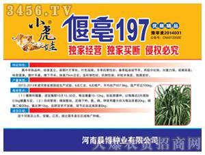 小麦种子-小虎娃偃亳197-麦兜-晨博