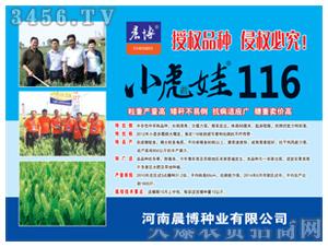 小虎娃鲁农116小麦种子-晨博