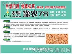 小麦种子-麦兜豫农78-晨博种业