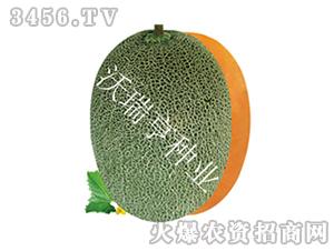 甜瓜种子-顺甜梨花蜜-沃瑞亨