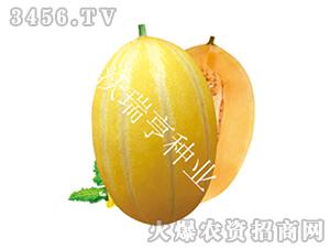 甜瓜种子-福帅金蜜-沃瑞亨