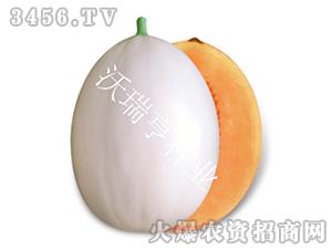 甜瓜种子-嘉帅美红-沃瑞亨