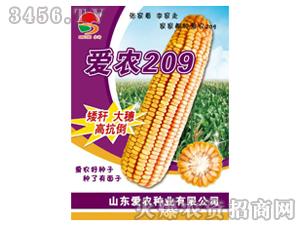 玉米种子-爱农209-爱农种业