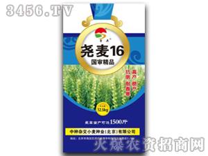 小麦种子-尧麦16-爱农种业