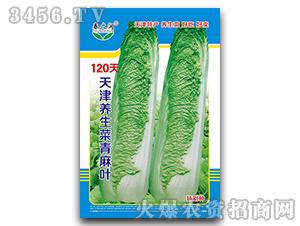 120天天津养生菜青麻
