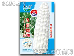 甜糯玉米种-香甜糯60