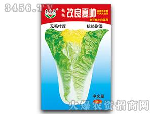 小白菜种子-改良夏帅-