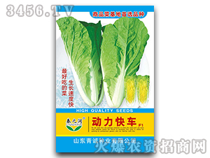 小白菜种子-动力快车F