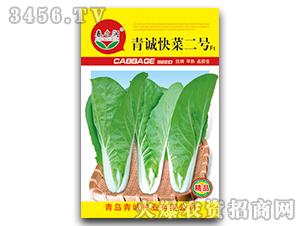 小白菜种子-青诚快菜二