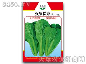 小白菜种子-强绿快菜F