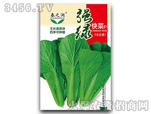 小白菜种子-强绿快菜-