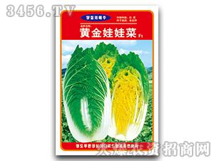 大白菜种子-黄金娃娃菜