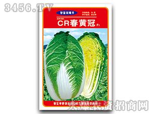 大白菜种子-CR春黄冠