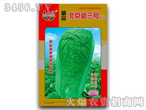 大白菜种子-精品北京新
